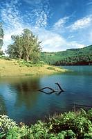 Glenmorgan lake in Nilgiris ; Ooty ; Ootacamund ; Udhagamandalam ; Tamil Nadu ; India