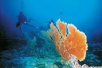 Seabed. Maldives.