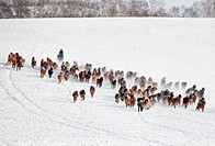 Horses on grassland in Hebei,China