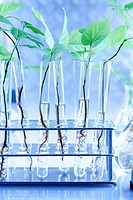 Seedlings in laboratory
