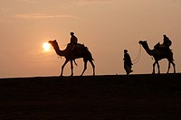 Camels riders walking on sand dune during sunset in Khuri ; Jaisalmer ; Rajasthan ; India