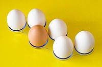 six eggs on yellow background