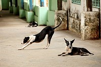 Dogs in a alley, Myanmar, Burma, Asia