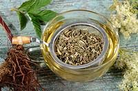 Cup of Meadowsweet tea / Filipendula ulmaria / tea strainer