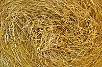 Germany, Hesse, Close up of straw