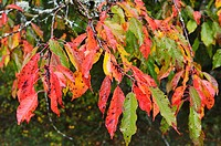 Germany, Baden Wuerttemberg, Close up of autumn leaves
