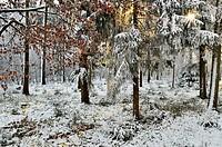 Germany, Baden Wuerttemberg, Villingen Schwenningen, View of rural winter scene