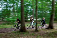 GROUP OF CYCLISTS IN THE FOREST OF CHAMBORD, ´LOIRE A VELO´ CYCLING ITINERARY, LOIR_ET_CHER 41, FRANCE