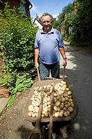 Man with wheelbarrow of new potatoes
