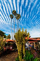 Cactus with unusual cloud formations above, Casa de Reyes Restaurant, Old Town, San Diego, California USA