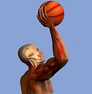 Illustration of a human figure playing basketball, showing the musculature of the upper body.