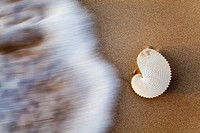 paper nautilus shell on the beach