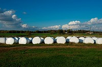 Bales of hay wrapped and lined up in a pasture on a farm, Chestertown Maryland USA