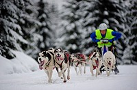 A sled dog team racing at the Husqvarna Tour Border Rush competition in Jakuszyce, Poland