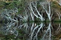 Tea trees Torbay near Albany, Western Australia