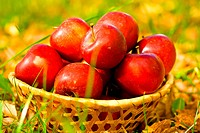 red apples in wicker basket in grass and leaves
