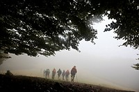 Hikers walking in misty forest path Montseny Natural Park Barcelona Catalonia Spain