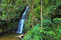 Malaysia, Kedah, Langkawi Island, Durian Perangin Falls, tropical rain forest,