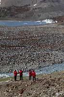 Antartica, South Georgia, penguins