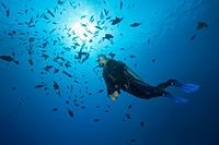 Redtooth Triggerfish, Scuba diver, scuba, diver, diving, dive, sportdiver, sportdiving, sport, watersport, Activity, Triggerfish, Triggerfishes, Balis...