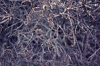 Close up of a bush without leaves