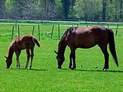 Pferde im Münsterland 6
