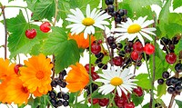 Berries and a flower mix