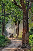 India, Uttarakhand state, Corbett National Park, off road vehicle ride in the forest