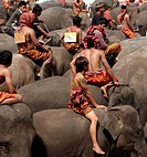 Asia, Thailand, Surin city, Elephant Round up