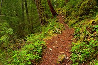 Parker Falls Trail, Umpqua National Forest, Oregon