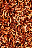 many ugly worms as background