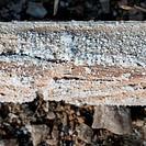 Natural salt crystal on wooden square log