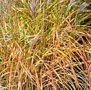 garden stocked with stunning ornamental grasses in late autumn with rich autumnal russet and straw tones, tints and hues along with texture and shape ...