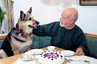 Elderly German Shepherd, Alsatian sitting with owner at a table for afternoon tea and cake