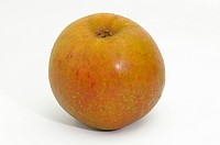 DEU, 2008: Domestic Apple (Malus domestica), variety: Zabergaeurenette, ripe fruit, studio picture.