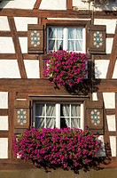 Flower box brimming with petunia in a window of half-timbered house, Baden-Wuerttemberg, Germany