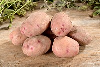 Potatoes, Reichskanzler / (Solanumtuberosum)