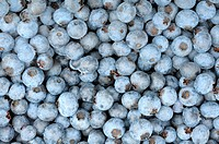 background of a ripe blueberries