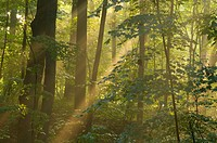 Forest sun rays, AW Stanley Park, New Britain, Connecticut