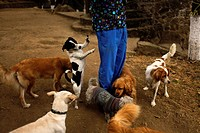 "Dogs follow a vet at the """"Milagros Caninos,"""" or Canine Miracles dog sanctuary in Xochimilco, Mexico City, January 25, 2013. The Canine Miracles (Mil..."