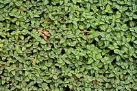 Central America, Panama, La Amistad, cloud forest, National Park, nature, leaf, leafs, Chiriqui