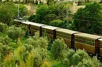 Soller train between olive, Sa Garriga, mallorca, Balearic Islands, Spain, Europe