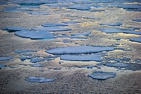 Pancake Ice-North Atlantic Ocean.