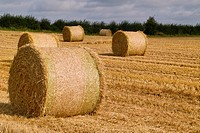 Straw bales, Loughnavalley, County Westmeath, Ireland