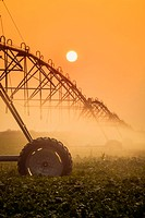 Silhouette of irrigation system with sun setting in the background