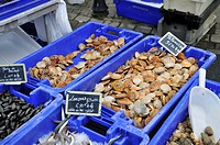 scallops (Chlamys spec.), in a box at the market, France, Brittany