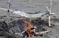 Pike on a spit, Yukon Territory, Canada, North America