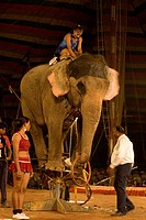 Artists performing show with elephant in Empire Circus , Bombay Mumbai , Maharashtra , India