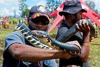 Python as amusement for specators at the traditional sing-sing gathering