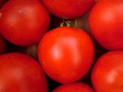 Montpelier, VT, Vermont, Farmer's Market, tomatoes